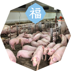豚にとっての福とは